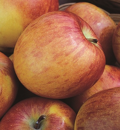 Apple 'Braeburn' (M26)